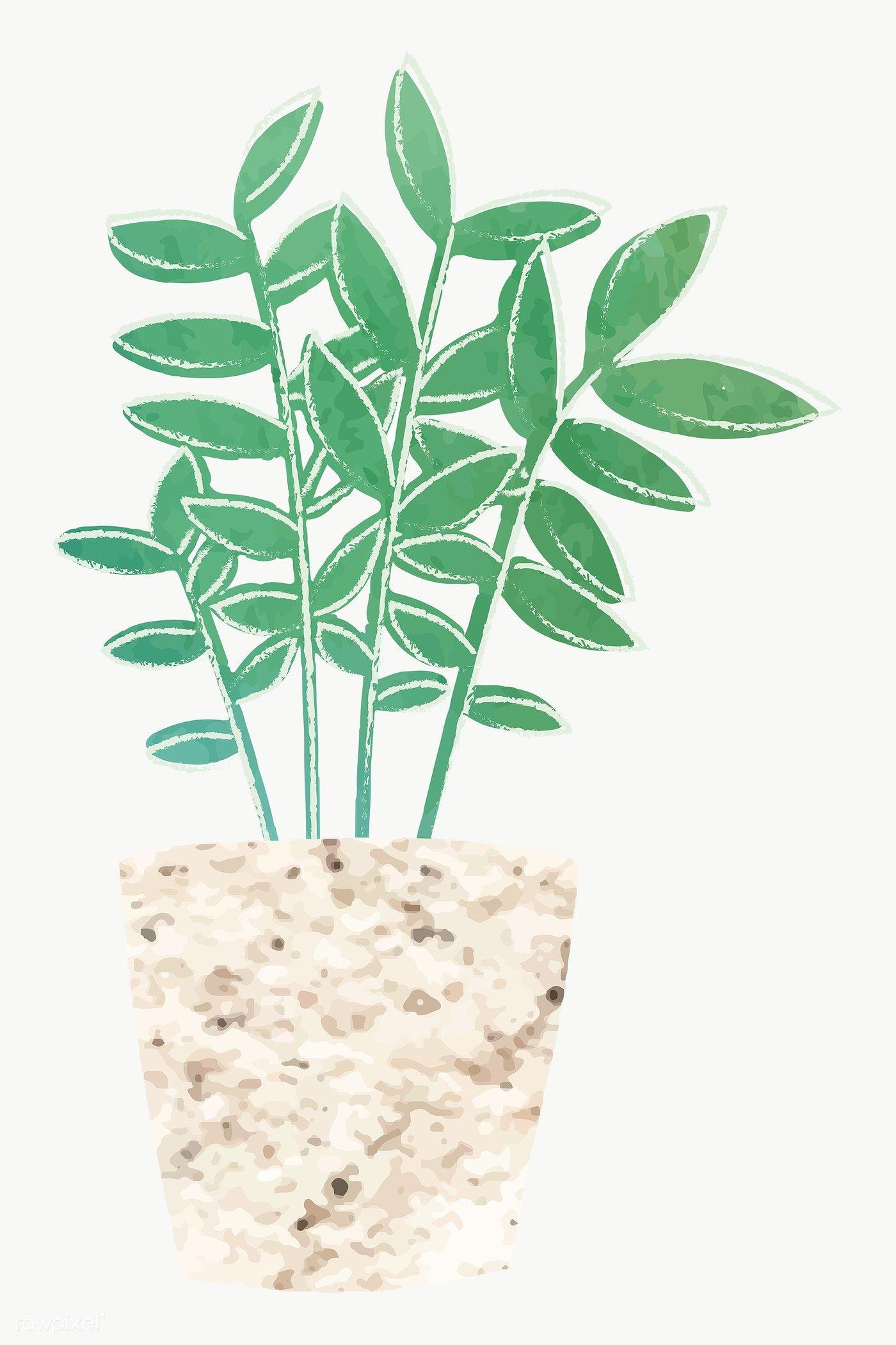 Download Premium Png Of Watercolor Tropical Potted Plant 2023106 Plants Cactus Design Aloe Vera Plant