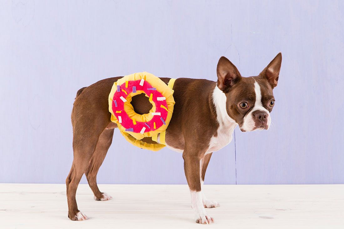 How To Dress Your Pet Up Like A Donut For Halloween Dog