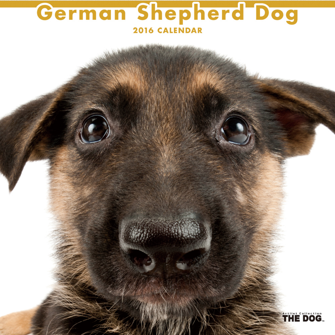 Artlist Collection THE DOG German Shepherd Dog calendar