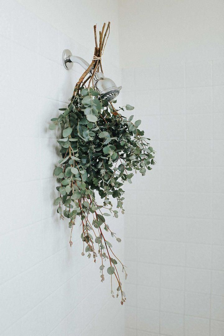 Photo of Eucalyptus Steam® Jar
