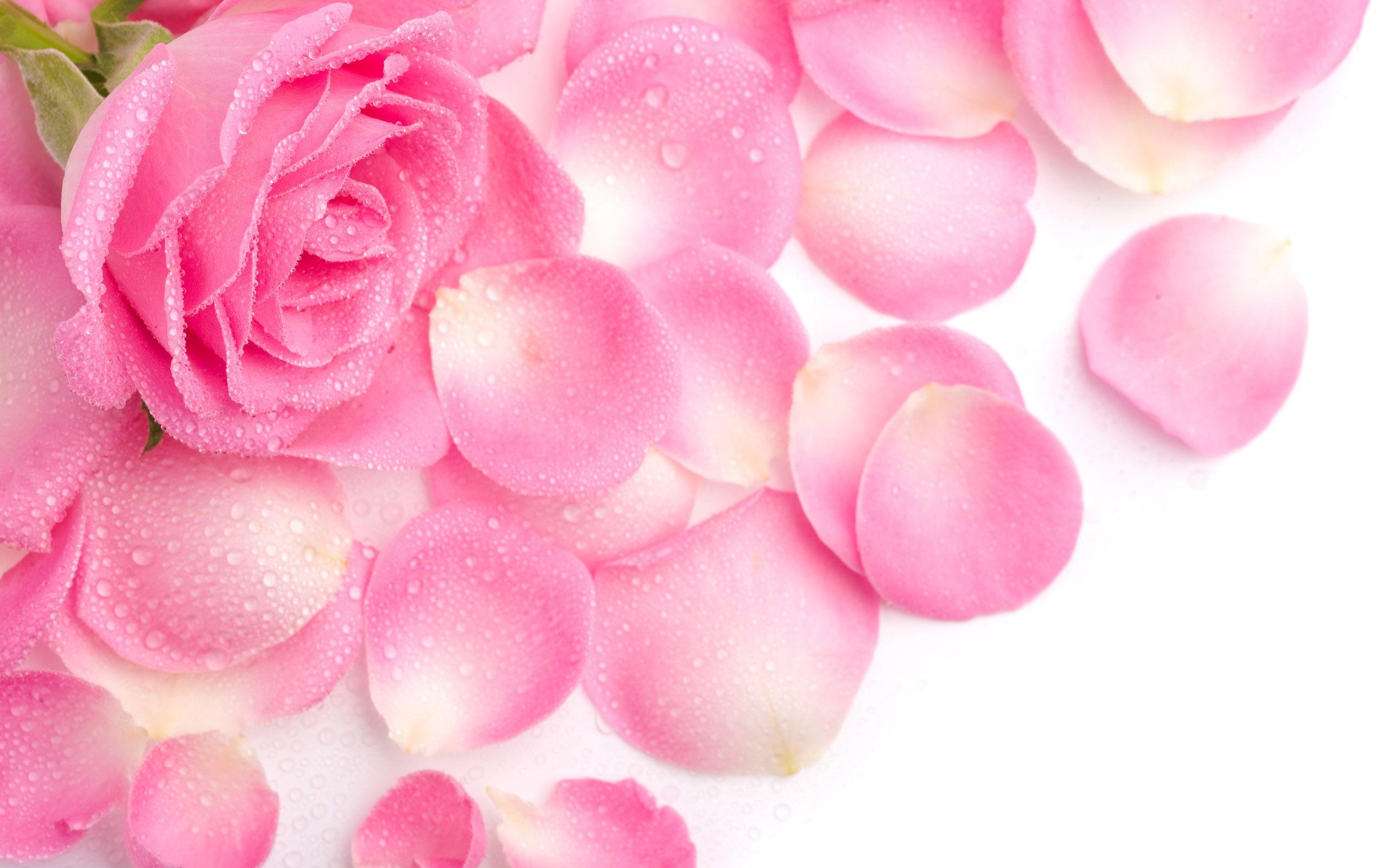 Pink Flowers 37 Pink Flower Wallpaper Pink Flower