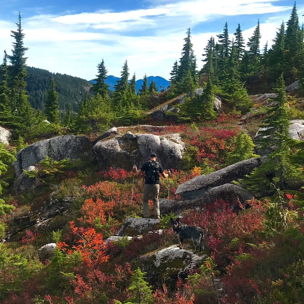 Minna Ridge : A Vancouver Island Day Hike | Mindful ...