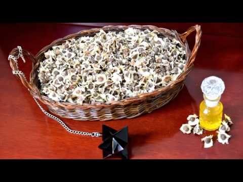 como preparar la semilla de moringa para la diabetes