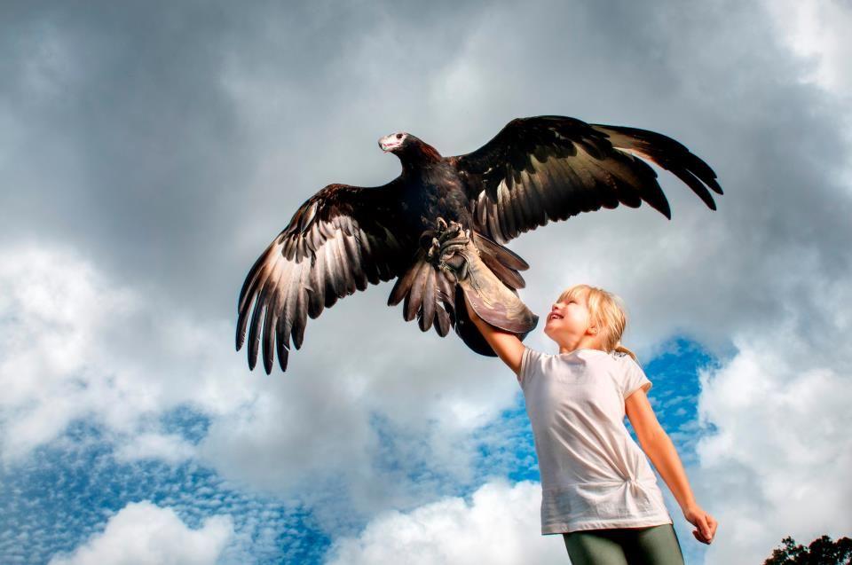 O Reilly S Rainforest Retreat Queensland Australia Prey Birds Of Prey Animals