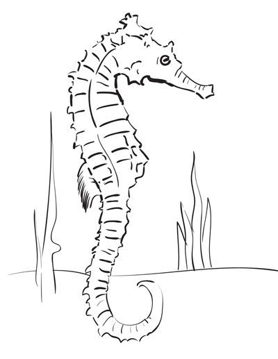 How To Draw A Seahorse Step By Step Seahorse Drawing Seahorse Art Drawings