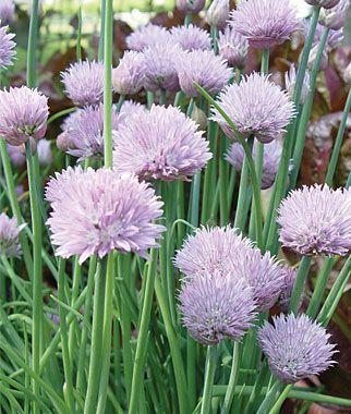 Pin On Herb Garden
