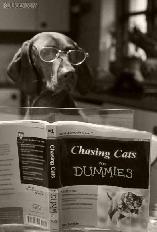 Chasing Cats for Dummies~♛