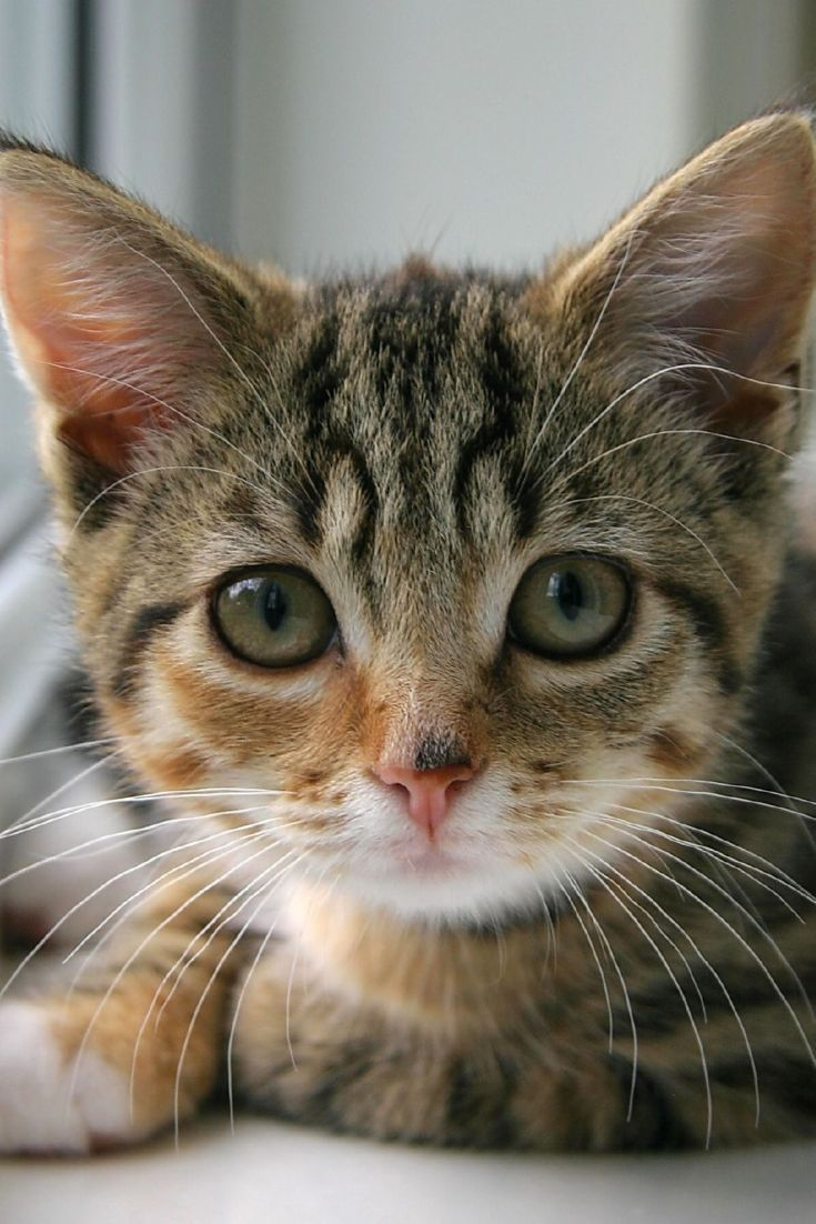 6 Human Foods You Should Never Feed Your Cat Cats