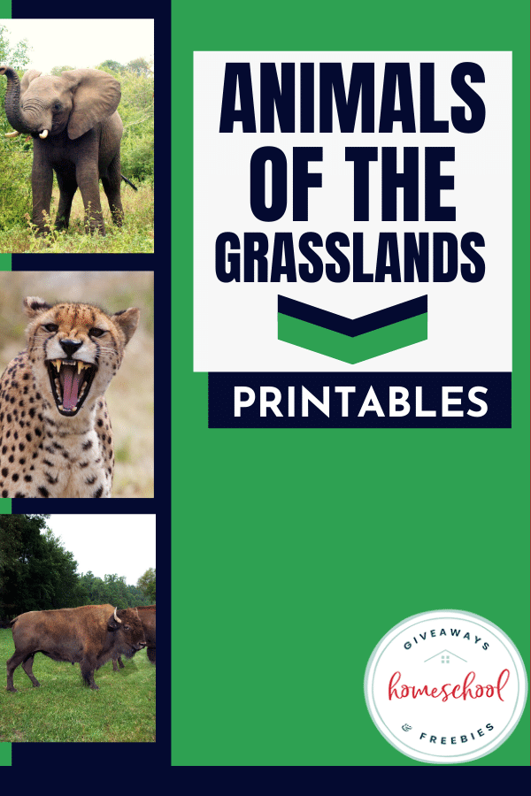 Animals of the Grasslands Printables Animal activities