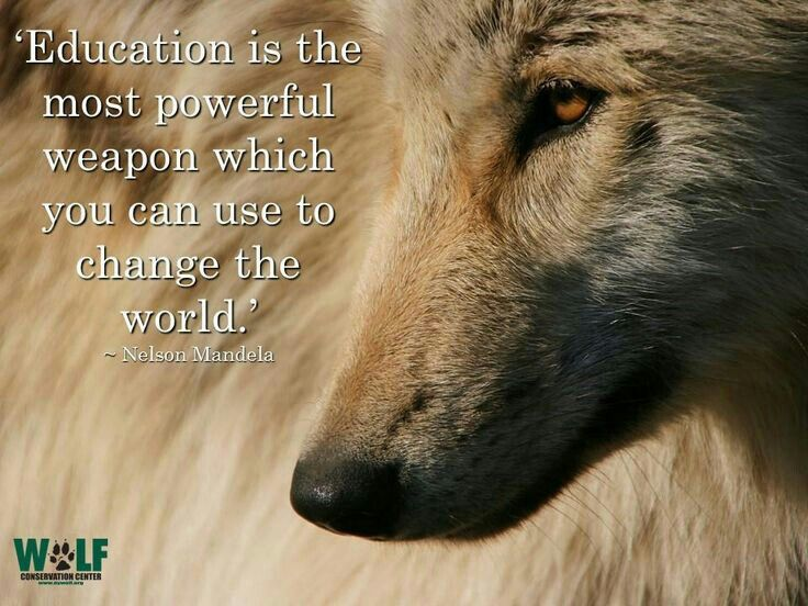 Animal Cruelty Quotes Impressive Pinjaime On Orly Wolf Pinterest  Wolf