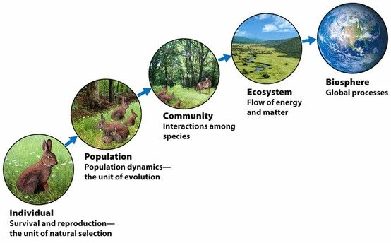 Levels Of Complexity Environmental Scientists Study Nature At Several Different Levels Of Complexity Ranging From Environmental Scientist Ecosystems Nature