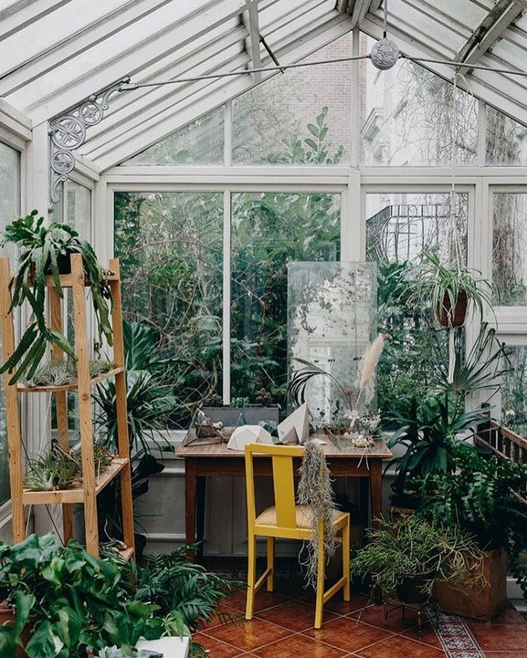 993 likes 14 comments indoor plants inspiration on sweet dreams for your home plants decoration precautions and options id=75774