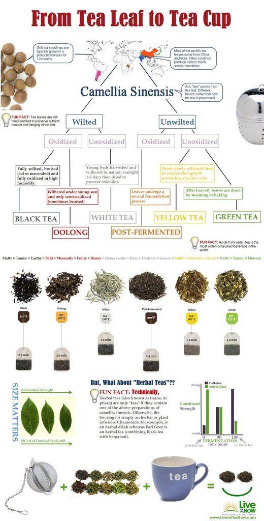Infographics tea