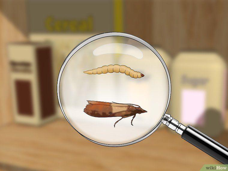 Como Acabar Con Las Polillas De La Madera Eliminar La Polilla De La Alacena Polilla Repelente De Insectos