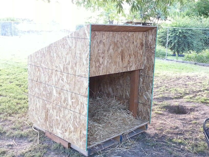 A quick temporary shelter for our goats.. Goats, Farm
