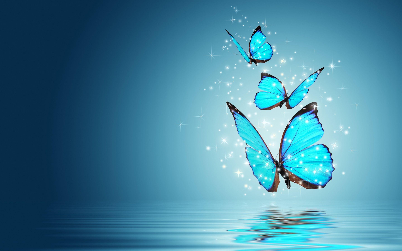 Butterfly Wallpapers For Desktop Wallpaper Butterfly