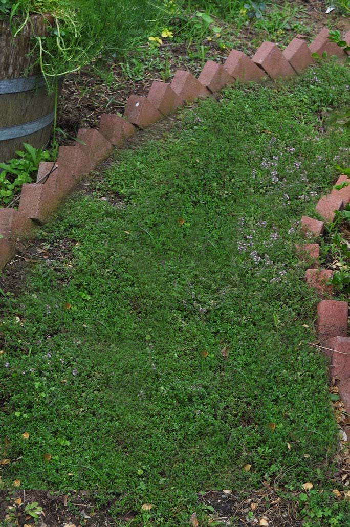 Thyme Path With Angled Brick Edging Brick Garden