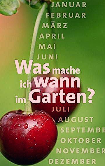 Photo of Gartenkalender: Was mache ich wann im Garten?