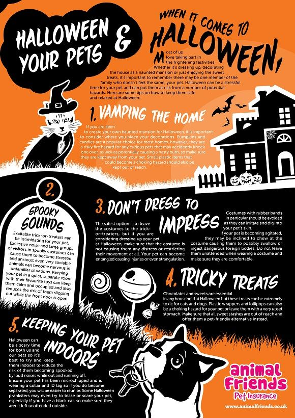 Keeping Your Pet Safe At Halloween Animal Friends Halloween Animals Halloween Safety Halloween Infographic