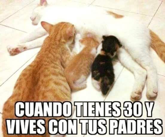 Memechef Chistosos Asi Es Como Te Ves Humor Divertido Sobre Animales Memes Divertidos Gatitos Divertidos