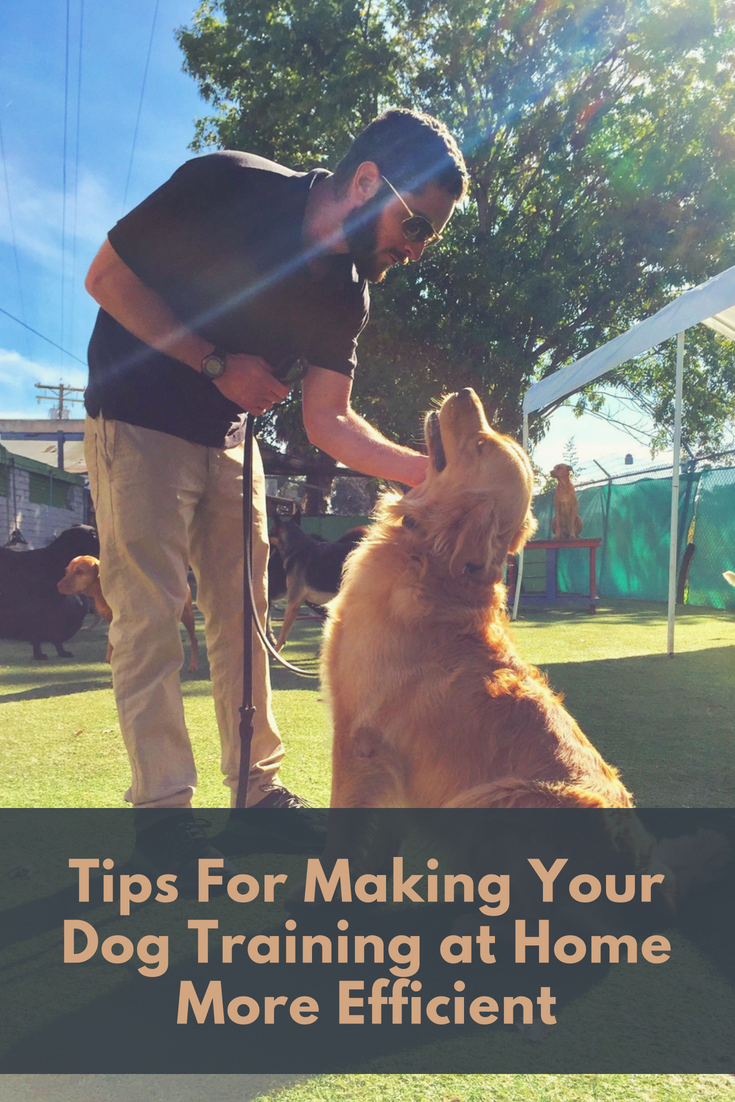 Dog training at home - what to do and where to start 30