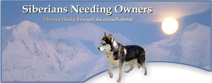 Lots Of Siberian Huskies That Need Homes Rescue Is In Washington