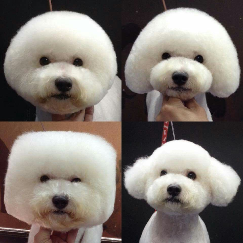 Amazing Dog Hairstyles Dog Grooming Dog Grooming Styles Bichon Dog
