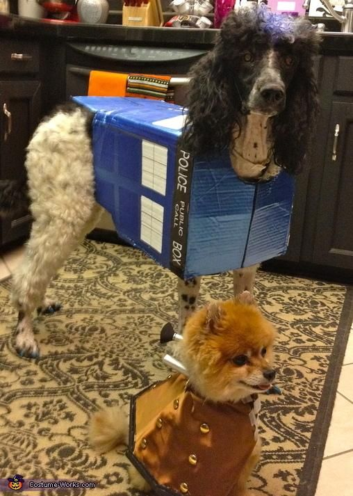 Tardis And Dalek Dogs With Images Dog Shaming Watch Doctor