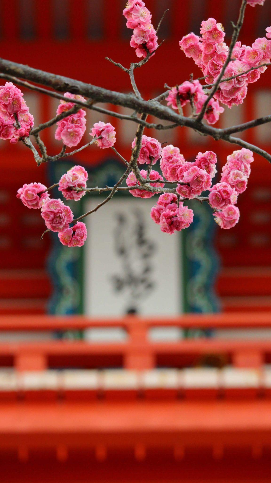 999 4k Hd Iphone Lockscreen Background Wallpaper Cloud Clipart Cherry Blossom Japan Beautiful Flowers Images Flower Images