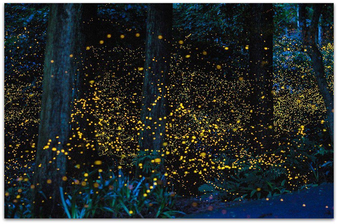 http://cdn2.bigcommerce.com/server500/437cc/product_images/uploaded_images/fireflies-open-shutter5.jpg