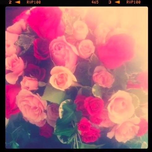 Polaroid flowers..