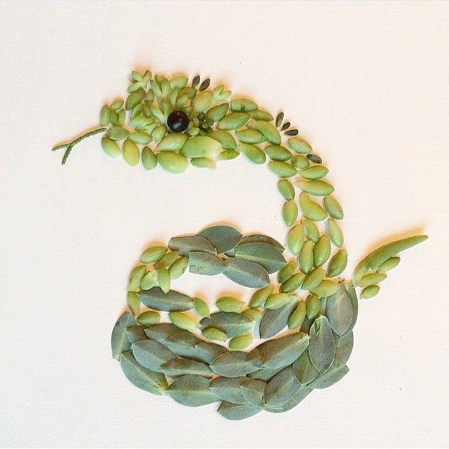 Succulent snake! (Rough Scaled Bush Viper)