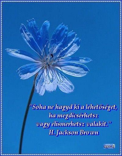 idézetek szép képeken Szép képek idézettel. (kép) | Networking