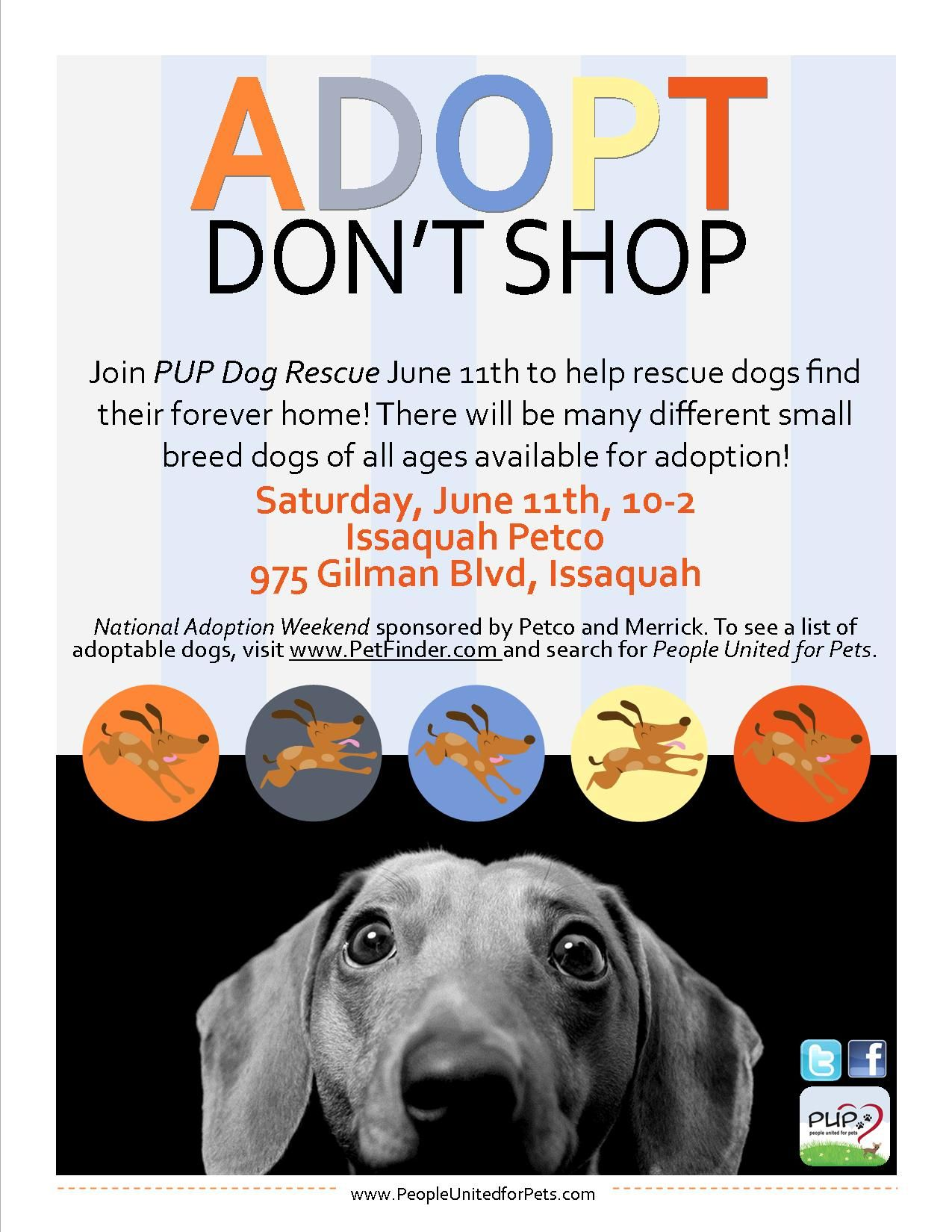 Pup Dog Rescue Flyers Dog Adoption Pet Event Rescue Dogs