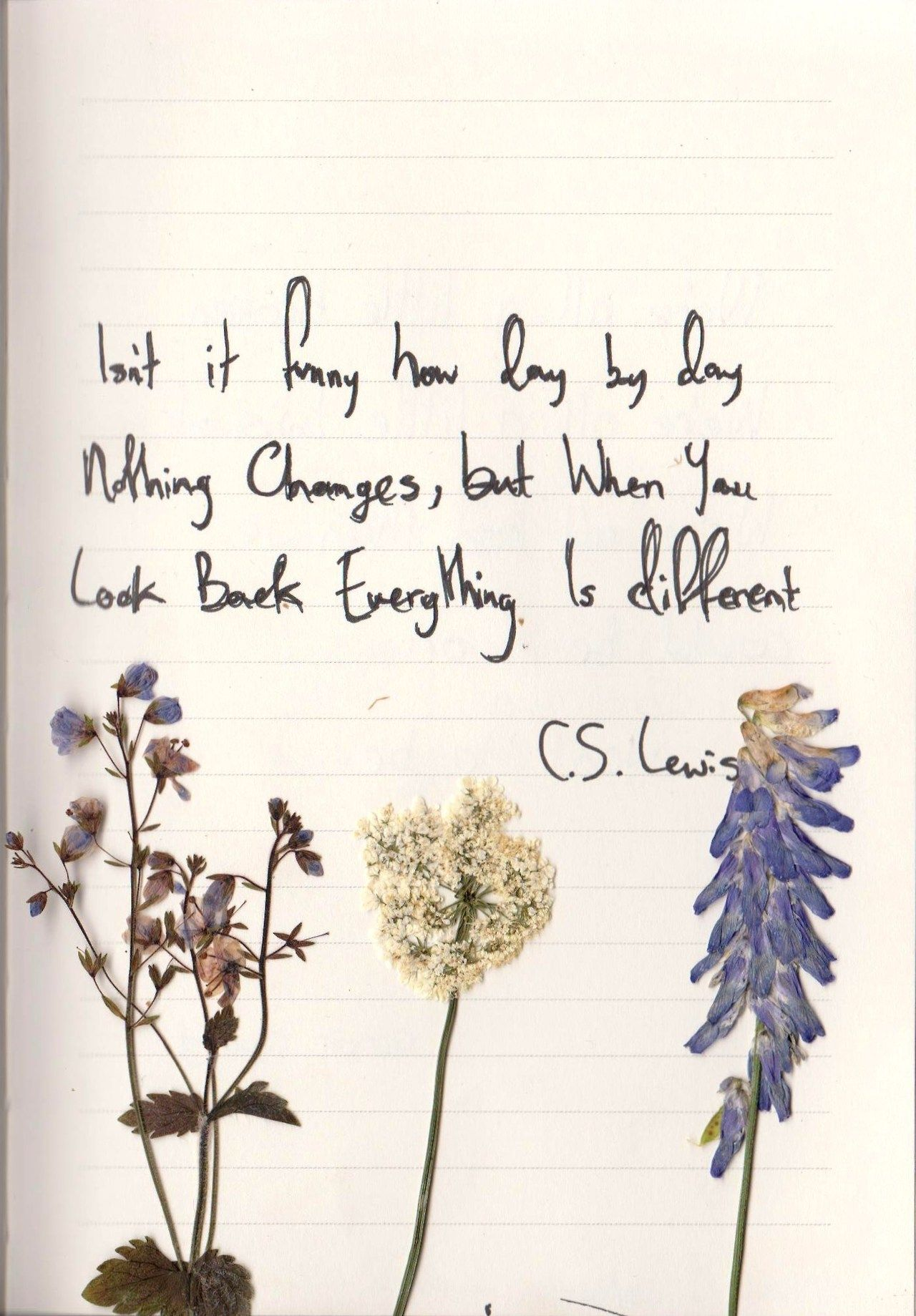 Isn T It Funny How Day By Day Nothing Changes But When You Look Back Everything Is Different C S Lewis Cheesy Quotes Pretty Words Sweet Quotes