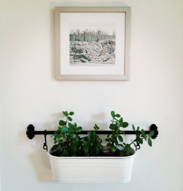 Ikea Fintorp Rail Used To Hang Plants On The Wall In Living Room By Mirror Use AS Chalk Paint