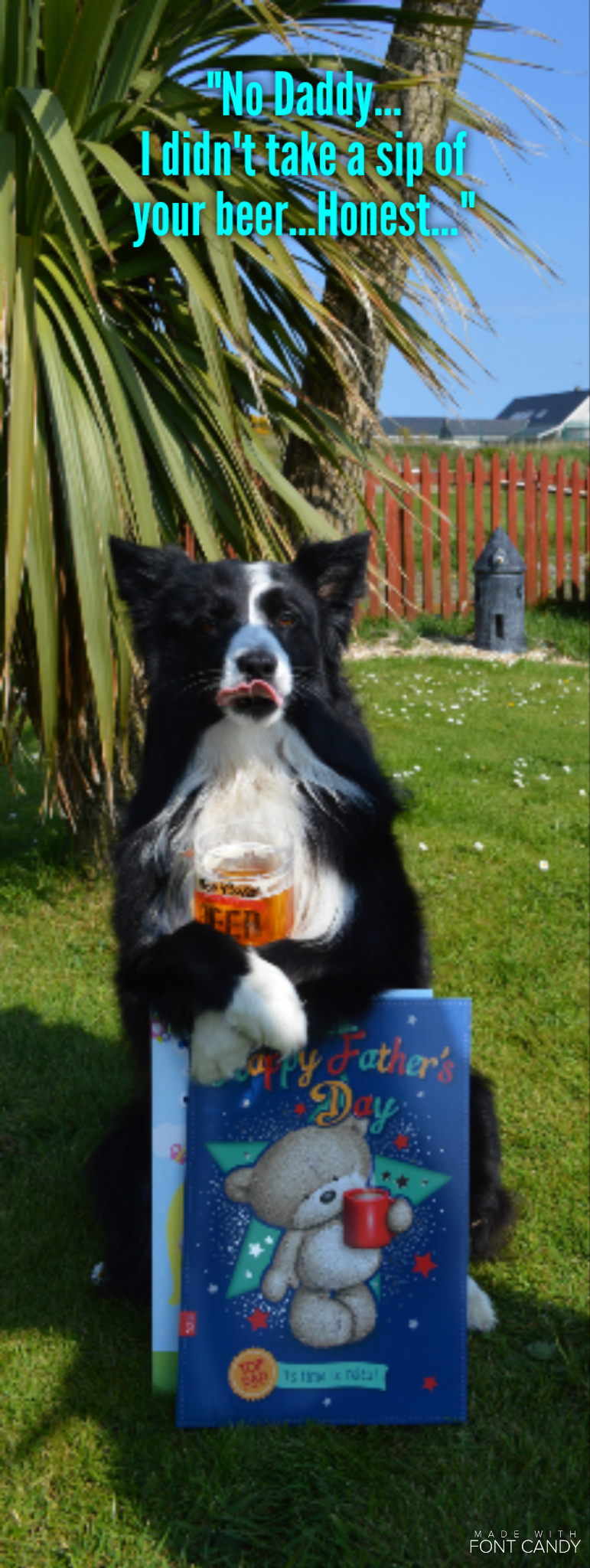 """""""No Daddy...I didn't take a sip of your Beer...Honest..."""" says Asha the border collie with a expression on her face that tells a different story..."""