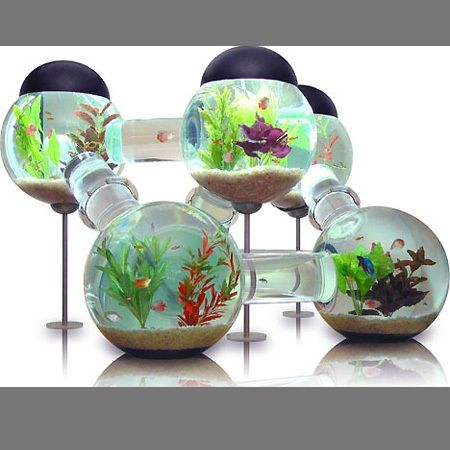 Fish bowls like a hamster maze house if only they could for Cool fish bowls