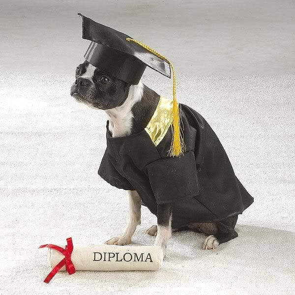 dog+graduation+cap+and+gown | did look online and all the puppy ...