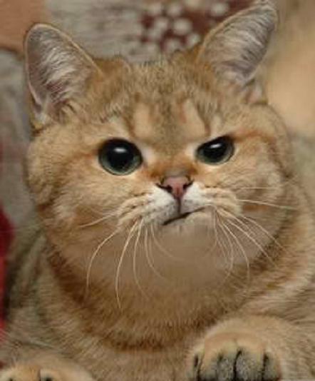 Midnightpoem Cute Animals Cute Cats Funny Cats