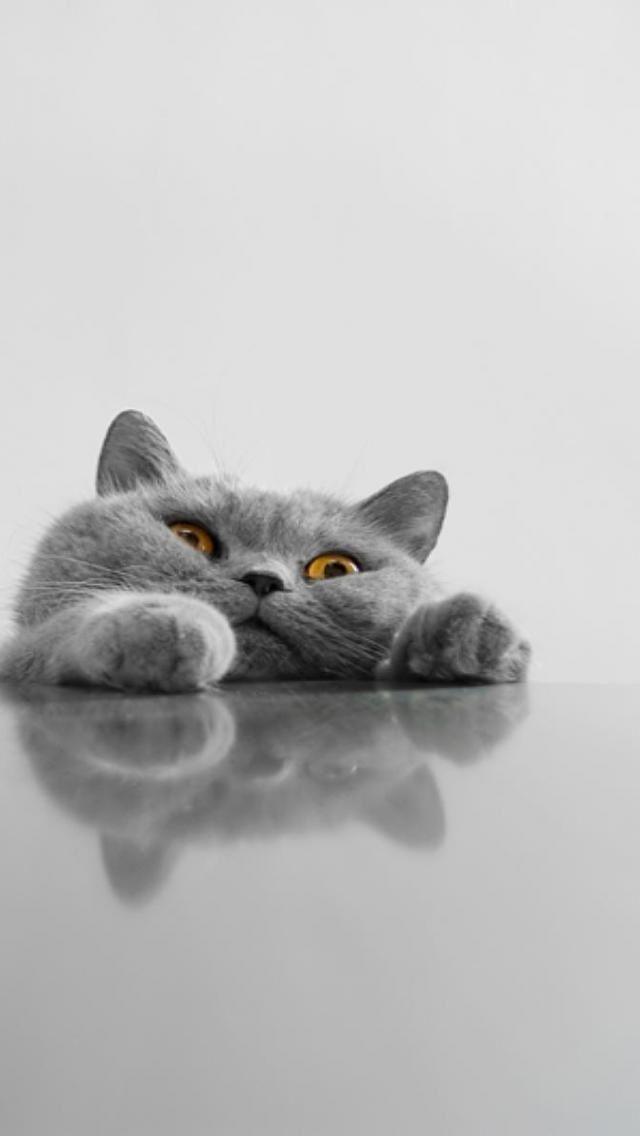 Iphone 5 Wallpapers Retina Kitty Fun Gatti Sfondi Iphone Sfondi