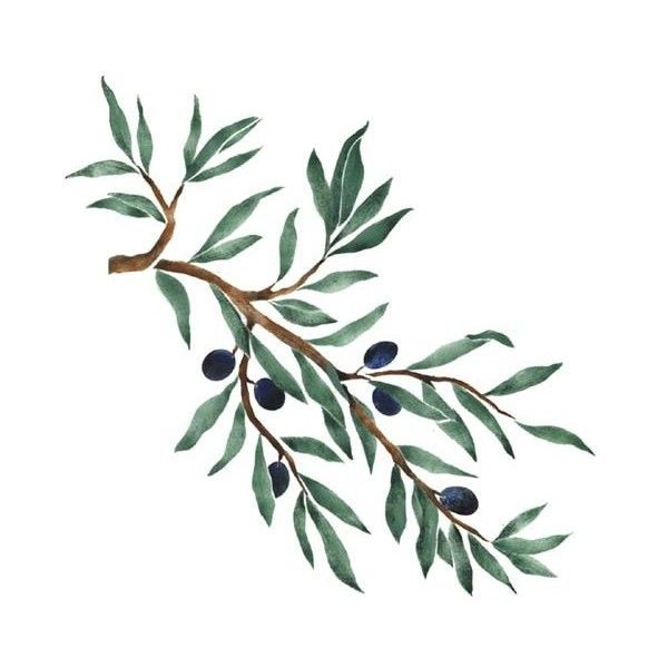 pencil drawing olive branches horizontal - Google Search ...