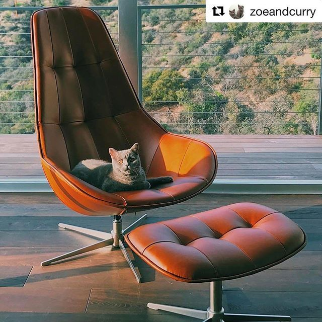 Our Weekly Repost Is As Lovely As It Gets Zoeandcurry Enjoying The Sun In Our Beautiful Boston Chair Catsofinstagram Boconcept Boconceptla Rep Boconcept