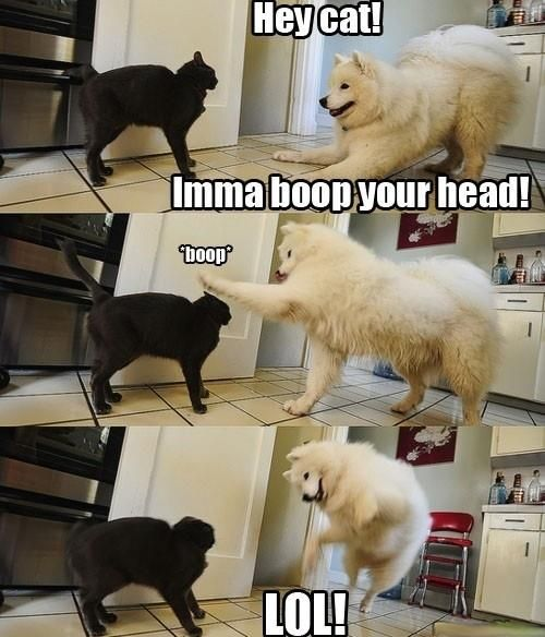 You So Silly Dog!