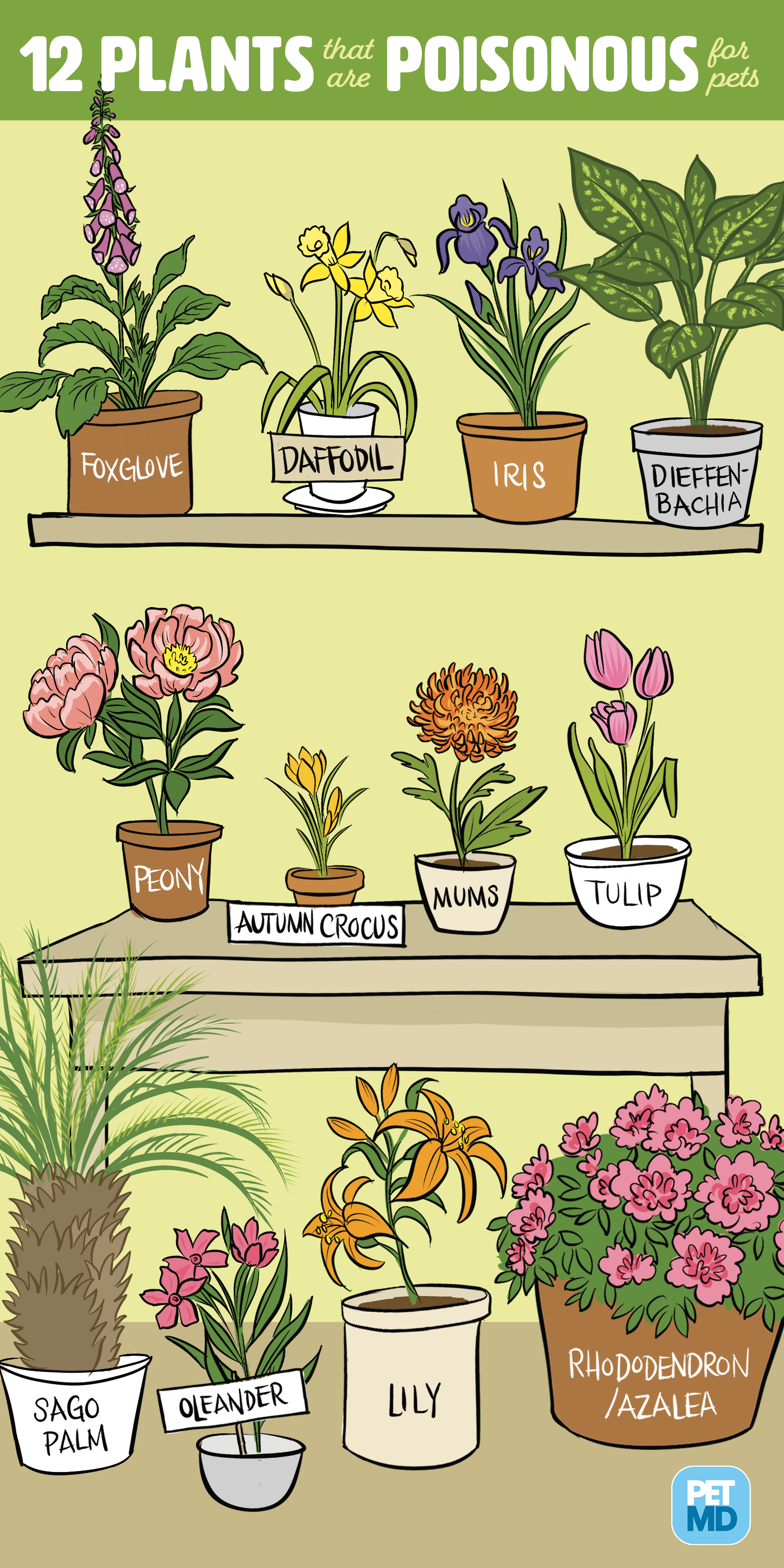 Are Succulents Poisonous to Cats and Dogs? petMD Cat