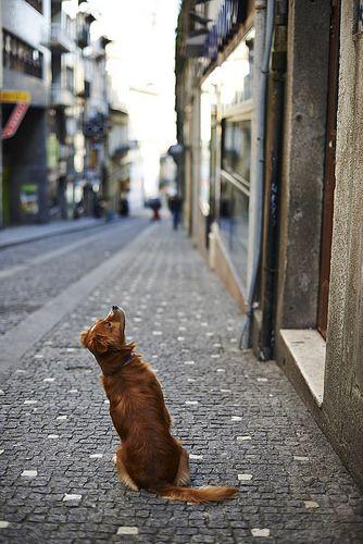 Esperando a Julieta