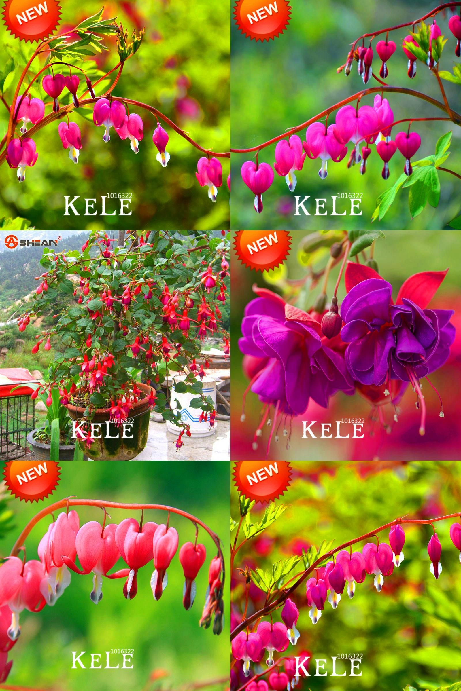 50 White Fuchsia Seeds Potted Flower Seeds Potted Plants Hanging Fuchsia