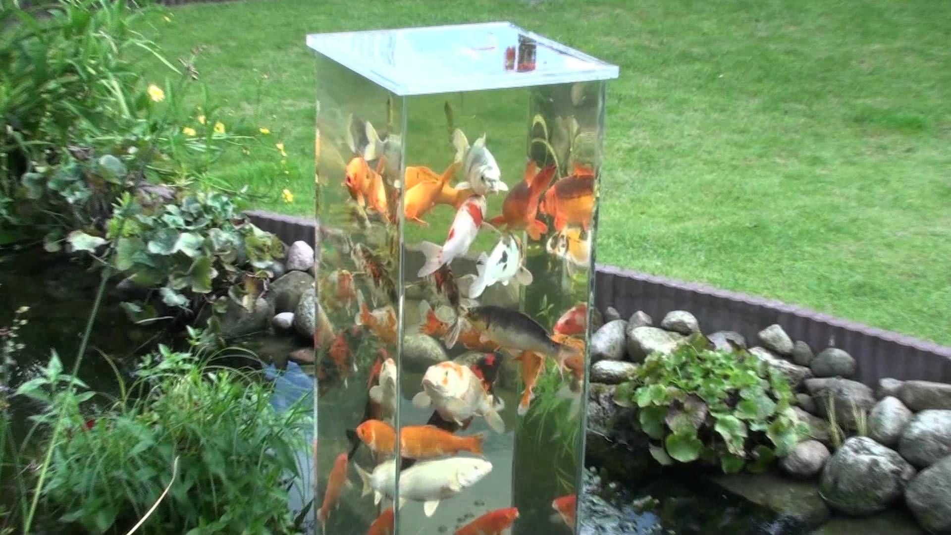 Bei tag schwimmen manchmal bis zu 20 kois im turm bis an for Welche fische passen zu kois