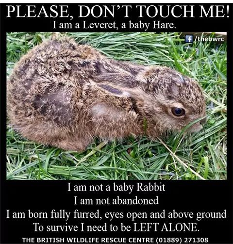 The British Wildlife Rescue Centre If You See A Leveret Please Don T Touch It British Wildlife Animal Help Wildlife