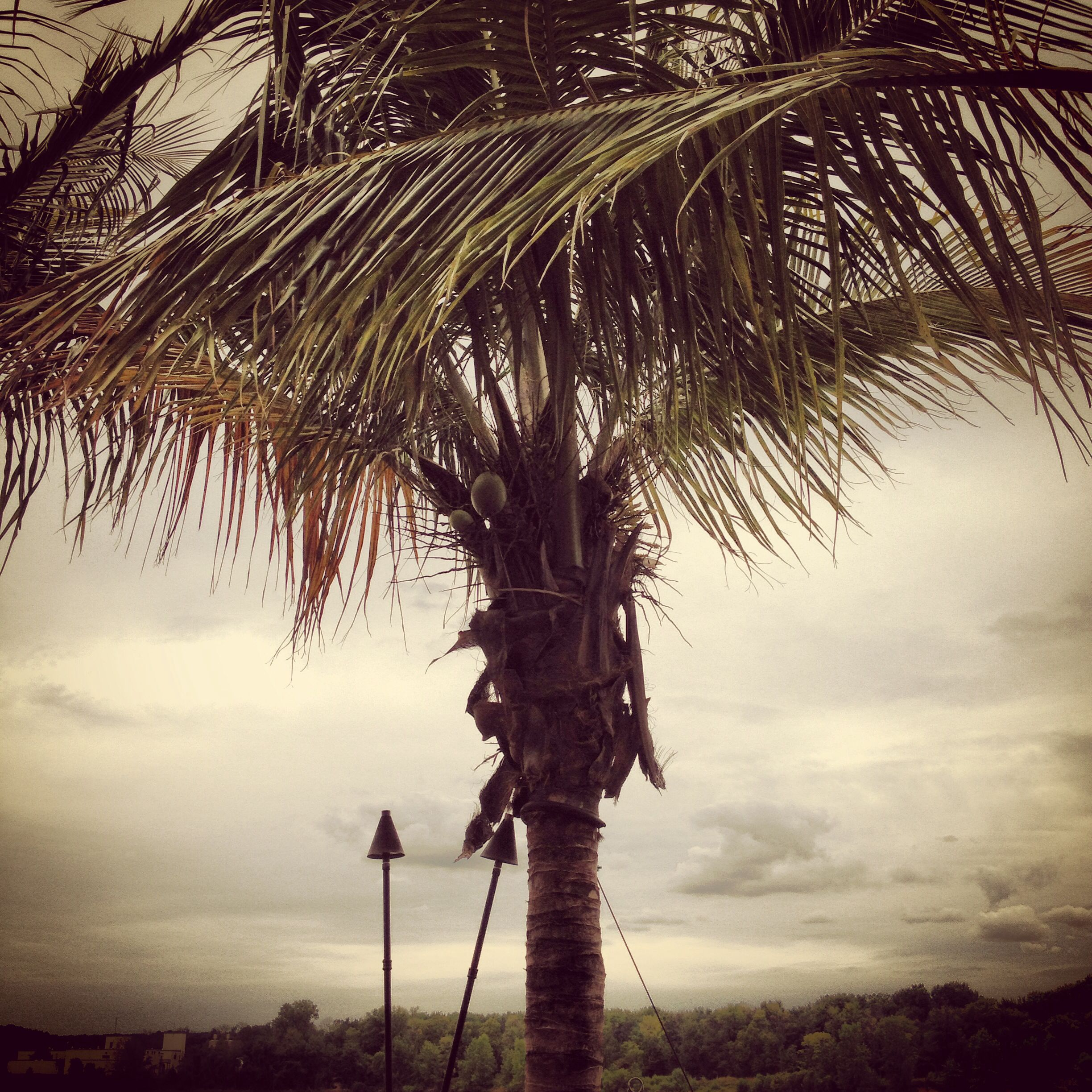 """Palm Trees in Michigan , really ? Yeah they exist only at """"the score """""""